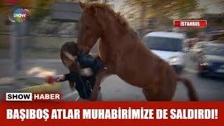 Başıboş atlar muhabirimize de saldırdı!