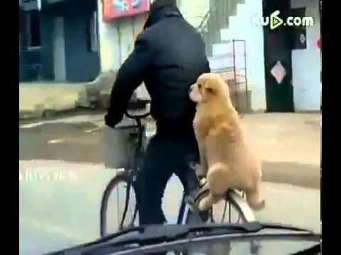 Прикольная собака Юмор! Прикол! Смех