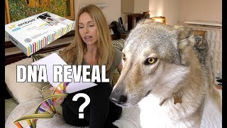 DOG DNA REVEAL - CZECHOSLOVAKIAN WOLFDOG - surprising result!