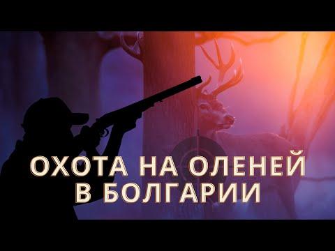 Red deer hunt Bulgaria 2013