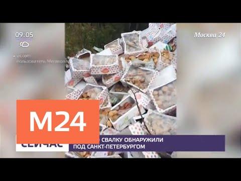 Сладкую свалку обнаружили под Санкт-Петербургом - Москва 24