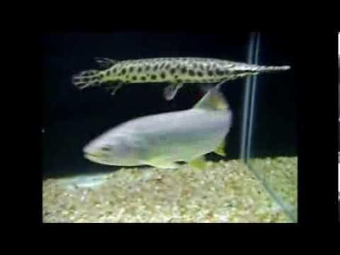 Aquário de Carnívoros