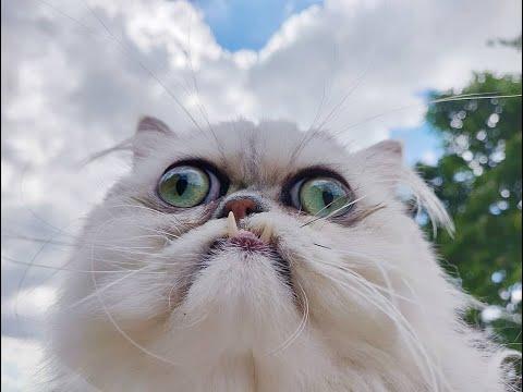 Çoğumuzun Bilmediği Yabani Kediler