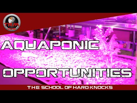 System Challenges - Learning how to do AQUAPONICS