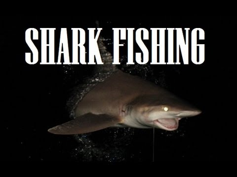 Extreme Midnight Shark Fishing Hawaii Big Game