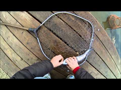 форелевая рыбалка в бисерово