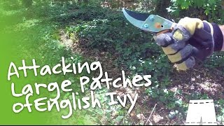 How to Remove English Ivy [Large Patch]   GreenShortz DIY