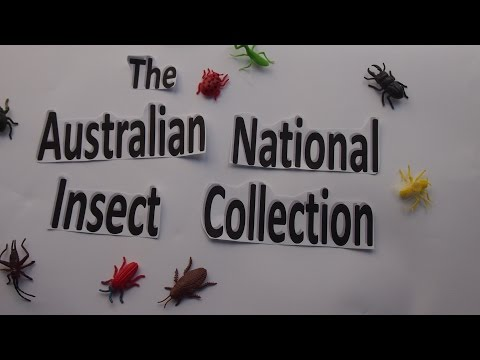 The Australian National Insect Collection   A Library Where The Books Are Insects
