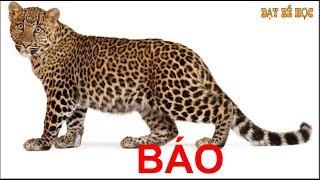 Dạy bé học con vật | Bé nhận biết động vật hoang dã nhanh nhất khi đi sở thú | Bài 232