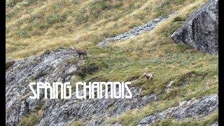 Glorified Goats | Chamois Hunting in New Zealand 2017