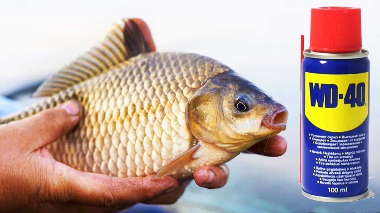 рыбалка карась какой корм