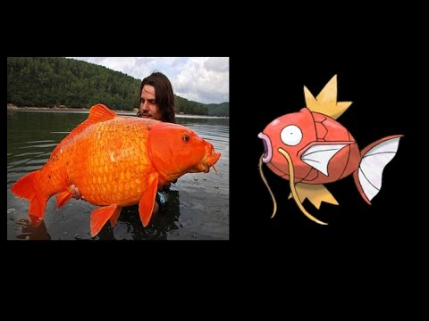 Los peces que inspiraron a Pokemon / Pokemones Reales / Pokemon in real life