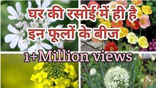 फ्री मे उगाये सुन्दर फूल जिनके बीज हमारे घर मे ही है ?.. Organic gardening landscape