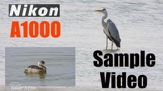 Nikon Coolpix A1000  4K Video Test !