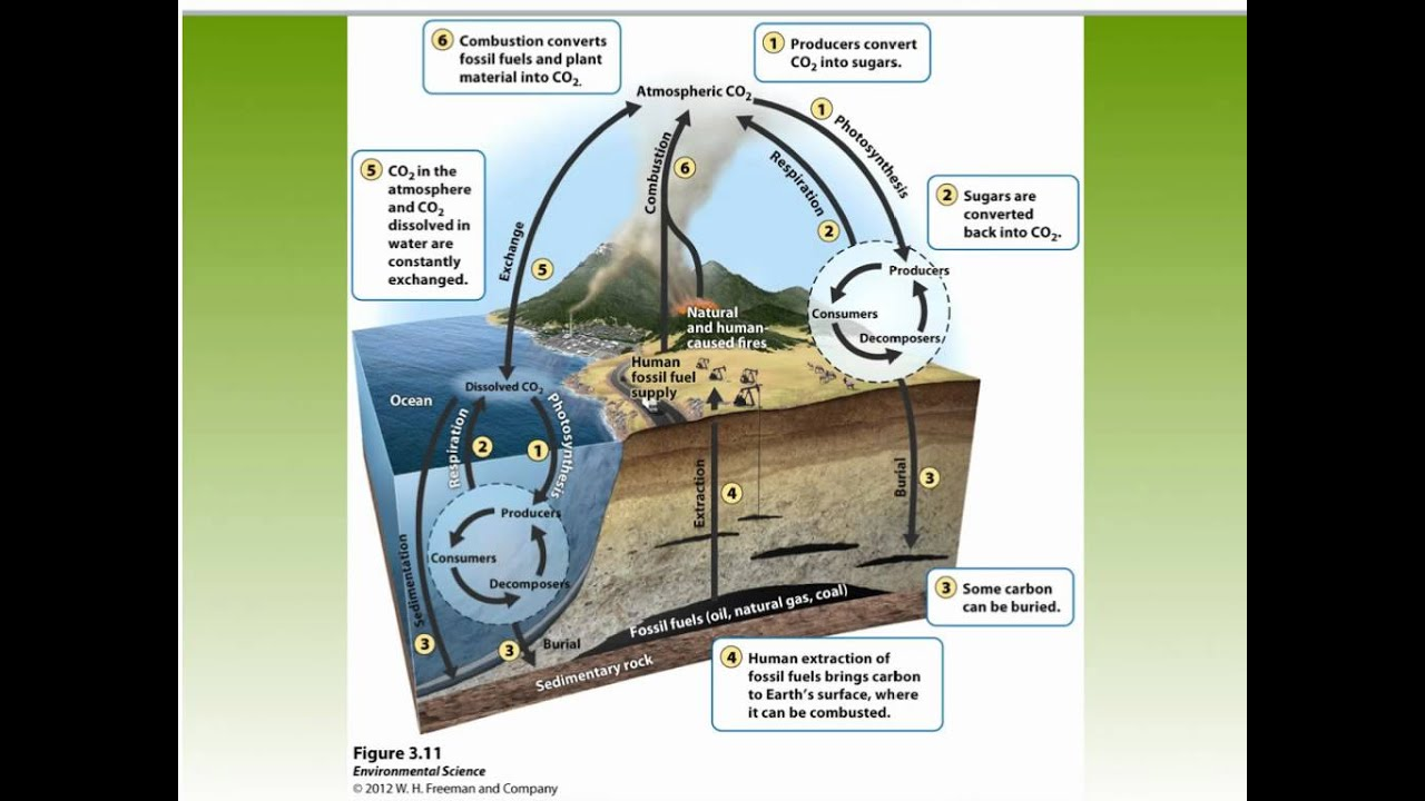 APES CH 3 Water cycle and carbon cycle - YouTube