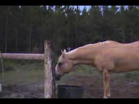 Sustos - Gritando por el campo, miedo a las vacas
