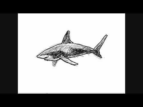 Dessin de requin comment dessiner youtube - Coloriage de requin a imprimer ...