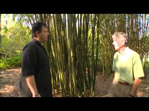 Central Florida Gardening - Bamboos At Leu Gardens