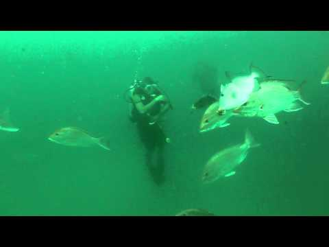 August 8, 2010 Scuba Dive on the St. Elmo Shrimp Boat in Mississippi - MGFB