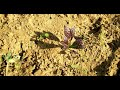 Grow Organic Stay Healthy Episode 1