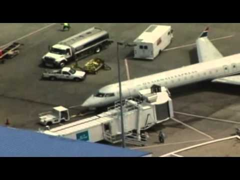 Bees Keep Plane Stuck at Gate