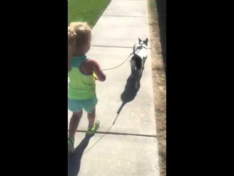 Dog walkers!