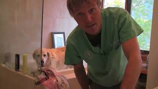 Homemade Dog Shampoo and How To Give a Dog a Bath!