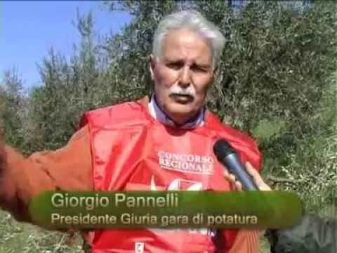 Intervista a Giorgio Pannelli – Presidente Giuria gara di potatura