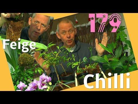Zusatzlicht für Pflanzen und Allerlei zu den Pflanzen im Zimmer Chilli