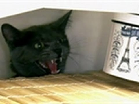Wild Cat Attacks Owners | My Cat From Hell
