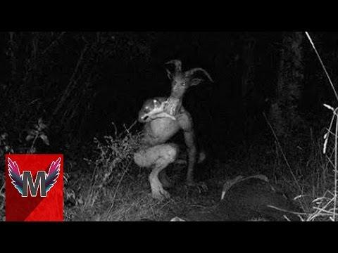 5 Makhluk Mitologi Yang Terekam Oleh Kamera