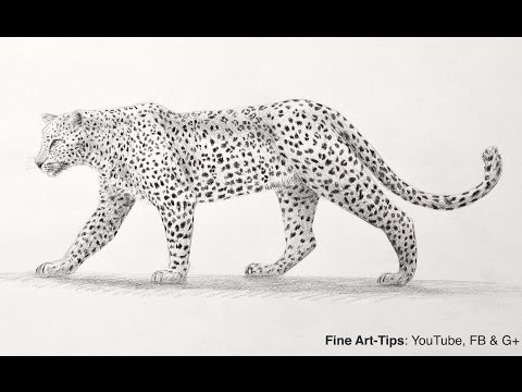 Snow leopard drawing step by step