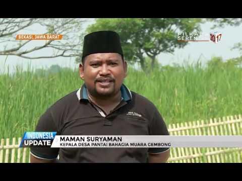 Ada Hutan Mangrove di Bekasi? Lihat yuk!