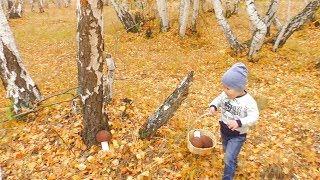 Арсенка собирает в лесу грибочки с сюрпризами Funny baby videos