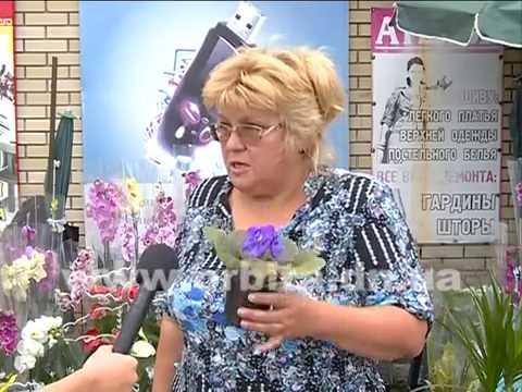 Секреты цветения фиалки круглый год