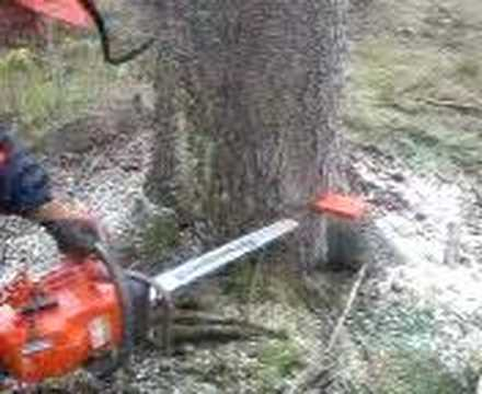 Logging with Husqvarna 372