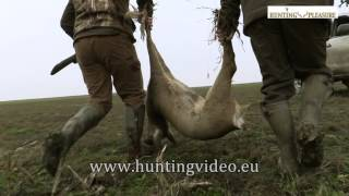 Roe Deer Hunting In Hungary