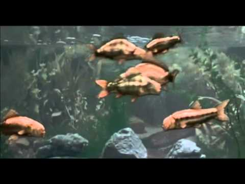 Monty python 39 s fish youtube for H m fish count