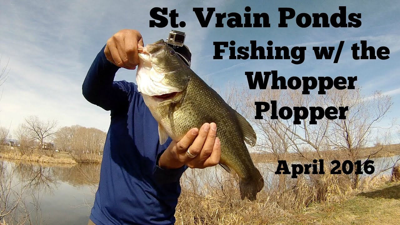 First Time Fishing the River2Sea Whopper Plopper   St  Vrain Park Ponds   April 2016