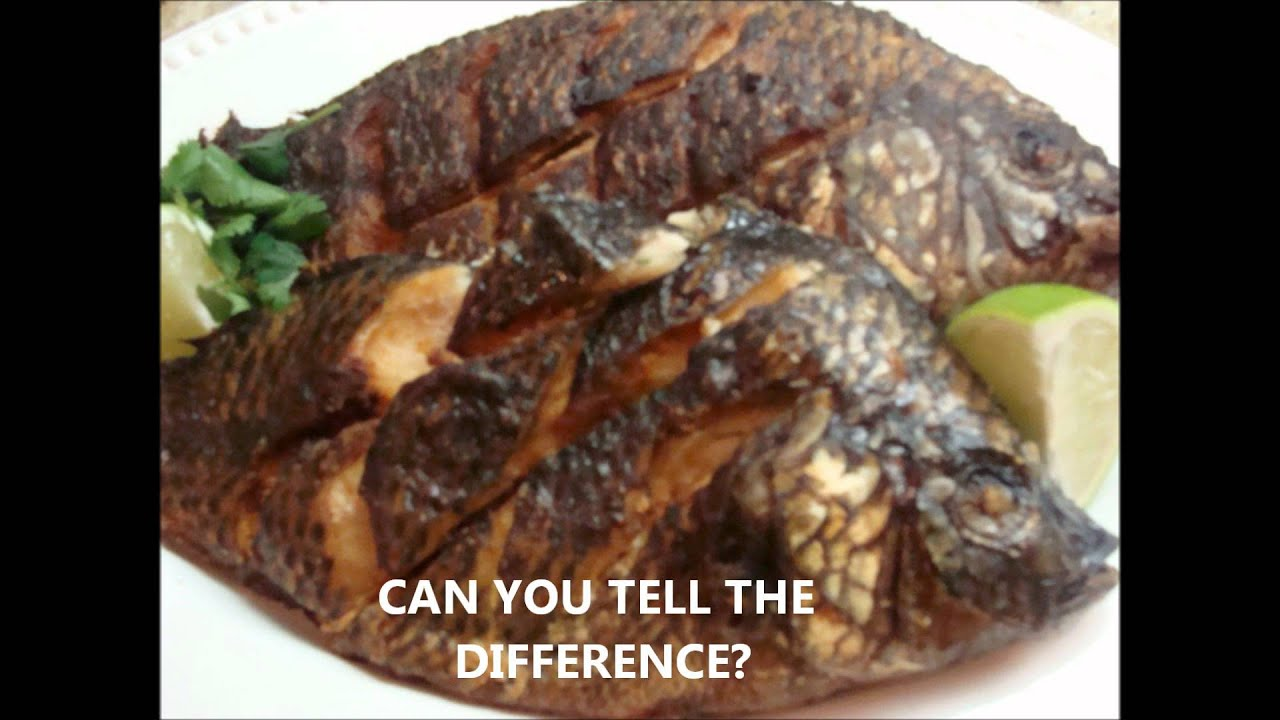 Fried tilapia vs roasted tilapia a tale of 2 fishes for How many calories in fried fish