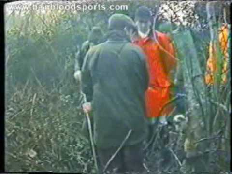 Fox hunting - Blood Sports in Ireland