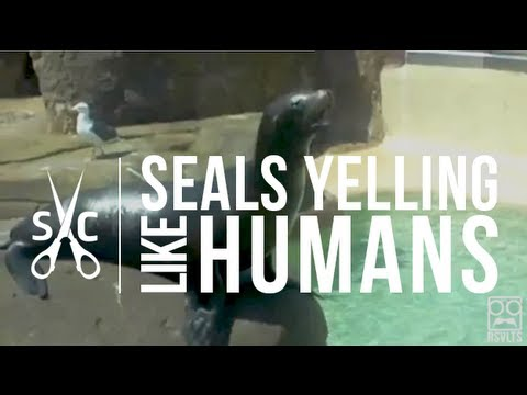 Seals Yelling Like Humans [Super Cut Compilation]