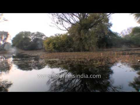 Boat safari in Bharatpur Bird Sanctuary, Rajasthan