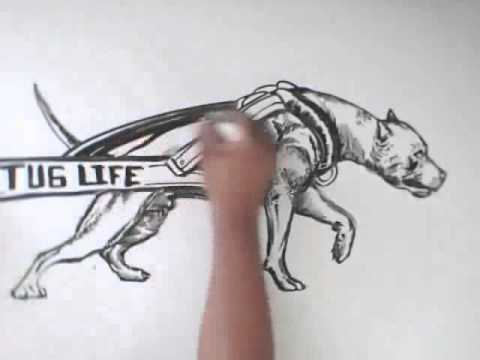 Watch dibujo de pitbull terrier