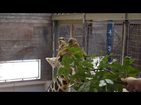 20091004 とべ動物園④
