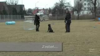 Dogteam.pl - Pozytywne Szkolenie Psów Legnica - grupa Rozbrykane nastolatki - Pola.