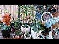 Plant Tour! Welcome to my Succulent & Cacti Garden :) | Natasha Rose