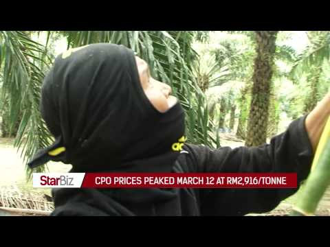 StarBiz TV : Steady demand for palm oil to support prices