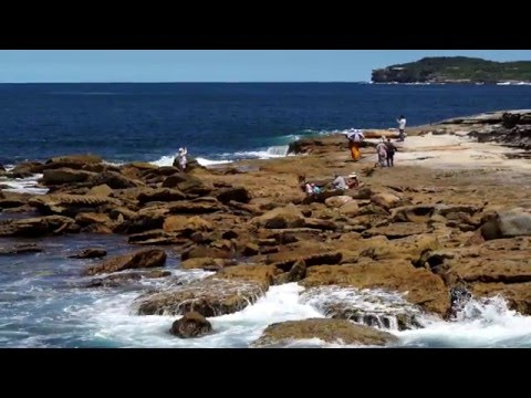 Bare Island  - Marine and Coastal Activity program