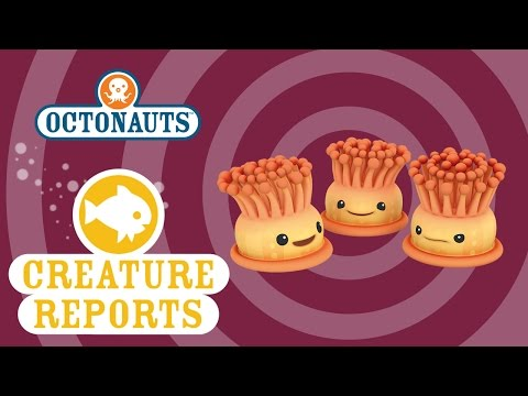 Octonauts: Creature Reports - Anemones
